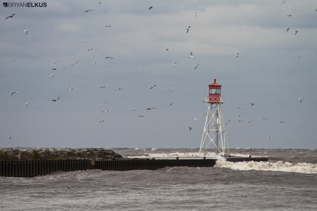 birds flying by the Erieau channel